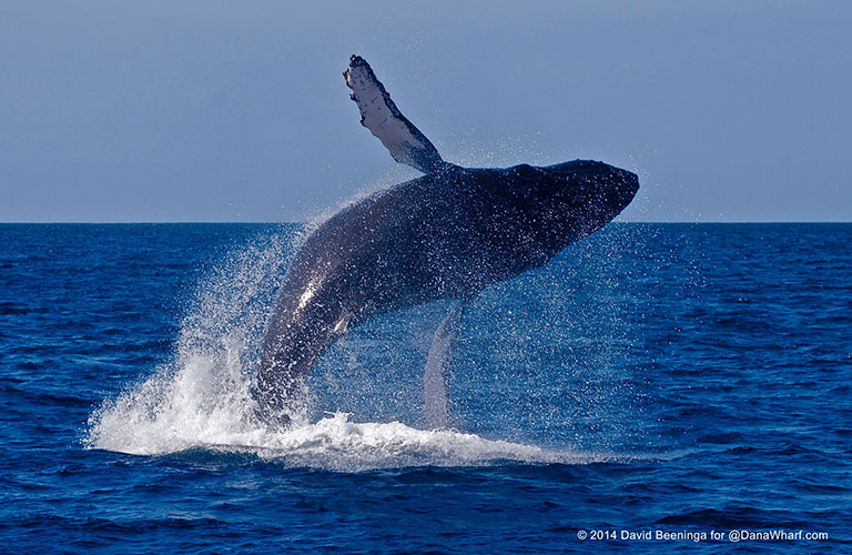 card_TTD_sailing_whalewatching