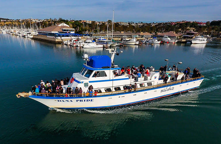 Things to do dana point harbor for Fishing dana point